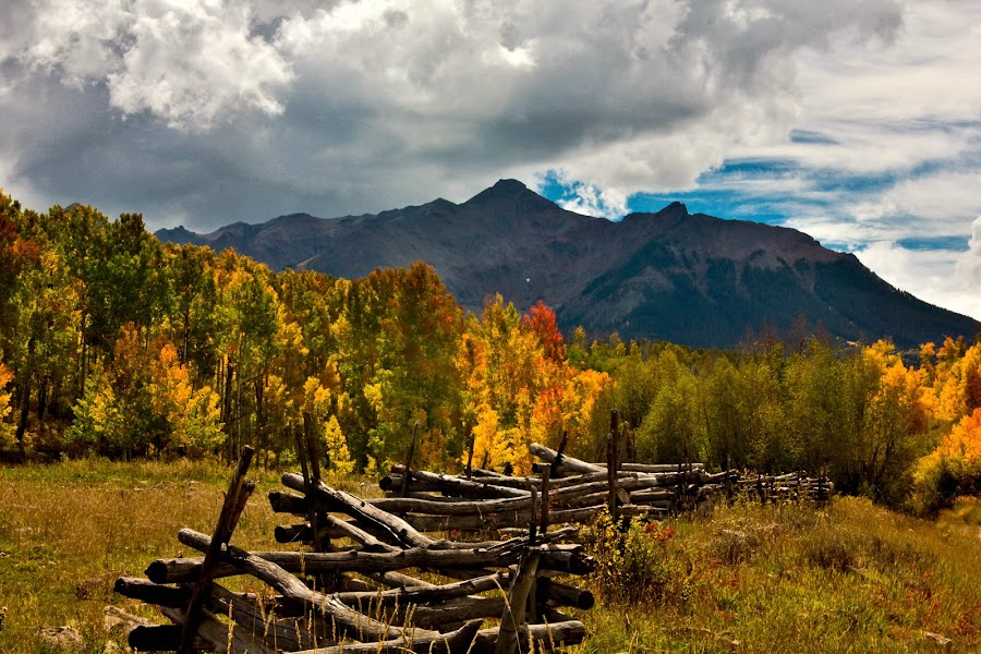 by David Short - Landscapes Forests ( color, fall, colorado, david lee short, last dollar road )