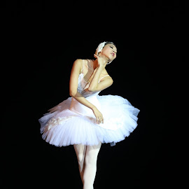 Like a Swan by Renato Marques - People Musicians & Entertainers ( dancing, classical, swan, swan lake, ballet )