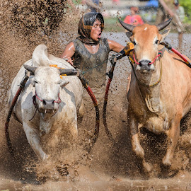 Go go go... by Kampia Bareh - Sports & Fitness Rodeo/Bull Riding ( west sumatera tourism, indonesia tourism, minangkabau culture, racing cows, pacu jawi )