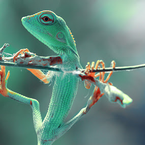 ngagulantung by Irfan Hikmawan - Animals Reptiles ( macro, animals, macrophotography, wildlife, reptile )