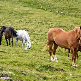 Free horses by Ioan Todor - Animals Horses ( free horses )