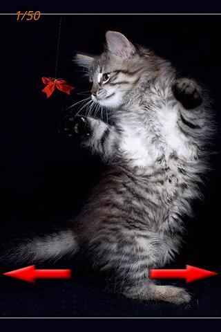 LOL猫2
