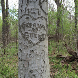 Love Tree by Raymond Paul - City,  Street & Park  City Parks ( theodore roosevelt, greeen, nature, tree, park, graffiti, carving, landscape )