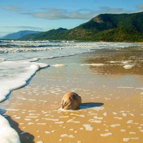 Oak Beach, Far North Qld. by Bevlea Ross - Landscapes Beaches