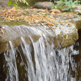 Water Fall by Lin Fauke - Nature Up Close Water ( water, colors, fall, leaves, water fall )