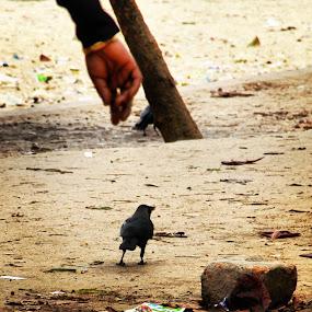 by Shiful Riyadh - People Body Parts ( abstract, bird, hand, instagram, crow,  )