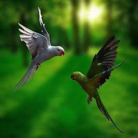 Fight by 3rd eye Monster - Animals Birds