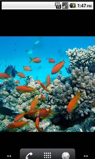 Underwater All Photo Gallery