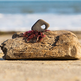 Love, the Beach by Angel McNall - Nature Up Close Other Natural Objects ( love, beach combing, sand, driftwood, heart shaped rock, hearts in nature, still life, seaweed, beach )