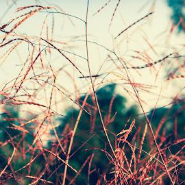 ablaze by Sunelle Schietekat - Nature Up Close Leaves & Grasses ( nature, grass, wallpaper, bush, leaves )