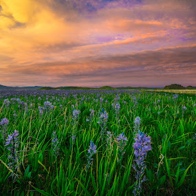 Camas Lillies by Jim Harmer - Flowers Flowers in the Wild ( flower )