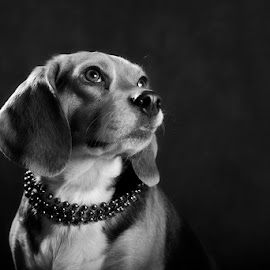 Mela by Fetina Petch - Animals - Dogs Portraits