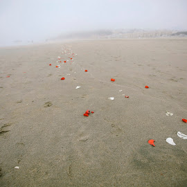 Petal Path by Andrew Ng - Landscapes Beaches ( sand, flower petals, engagements, marriage proposal, beach, san francisco, rose petals )