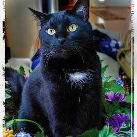 Test driving my spring wreath by Deborah Felmey - Animals - Cats Portraits ( cats, cat, pets, posing, portrait,  )