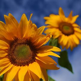 ESPERANZA DE IFRED by Yako Laverde - Nature Up Close Gardens & Produce ( esperanza de ifred, Hope )