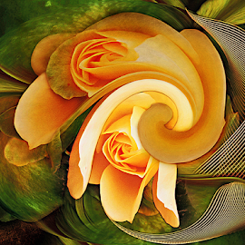 SOUL MATES by Carmen Velcic - Digital Art Abstract ( abstract, orange, green, roses, yellow, flowers, digital )