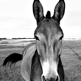 by Ray Sweeting - Animals Horses