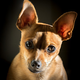 by Steve Hogan - Animals - Dogs Portraits
