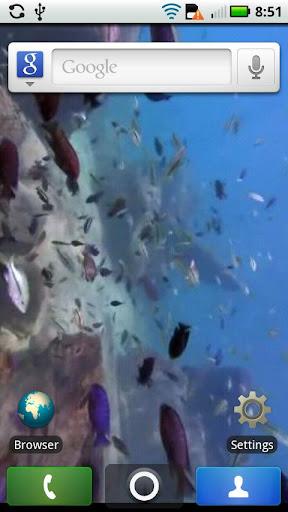 LIVE Fish in the Sea WALLPAPER