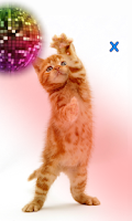 Screenshot of Talking, Dancing Cat.