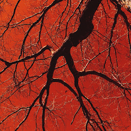 Red sky and branches by Mary Bostick - Digital Art Things