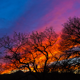 Sky Embers by Scott Geffre - Landscapes Sunsets & Sunrises ( orange, sky, magenta, blue, silhouette, sunset, trees )