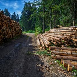 Logs by Stanislav Horacek - Landscapes Forests