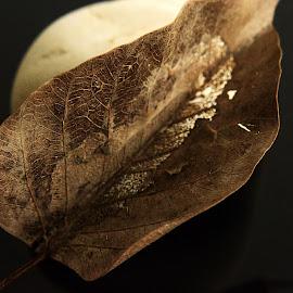 Moth Eaten by Prasanta Das - Nature Up Close Leaves & Grasses ( dry, leaf, moth eaten )
