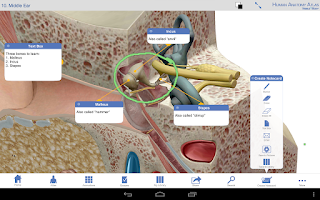Screenshot of Human Anatomy Atlas