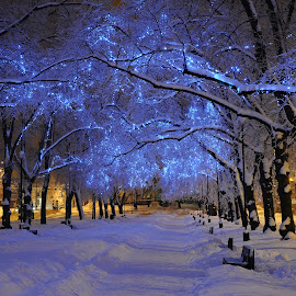 Blue alley by Teo Niklus - City,  Street & Park  City Parks ( winter, led, street, night, tallinn, city )