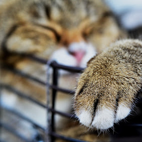 sleep cat by 思远 郭 - Animals - Cats Portraits ( cat, rest, rack, sleep, animal, sleeping, resting )