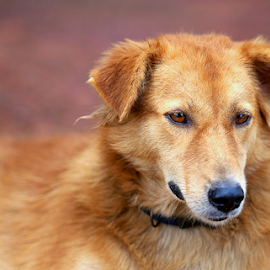 Lost in thought by D K - Animals - Dogs Portraits ( animals, dogs, pets, pupies )