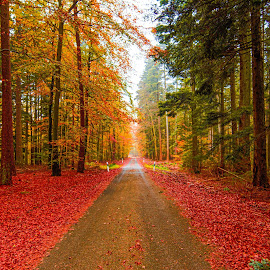 The Autumn Path by Avinash Jain - Landscapes Forests ( autumn, colors, palatinate forest, fall, pfälzerwald,  )