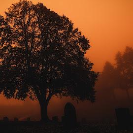 Halloween Orange Graveyard by Jeremy Hill - Landscapes Prairies, Meadows & Fields ( tombstone, orange, monochromatic, monochrome, fog, oak, fine art, halloween, oak tree, graveyard )