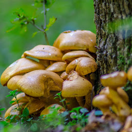 by Alin Lucian Dumitrescu - Nature Up Close Mushrooms & Fungi ( mushroom, yellow, mushrooms )
