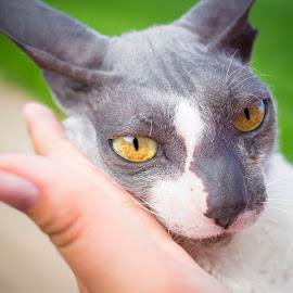 here kitty kitty by Rebecca Koch - Animals - Cats Portraits ( cat, cuite, beautiful, yellow eyes, feline,  )
