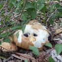 Pavement mushroom