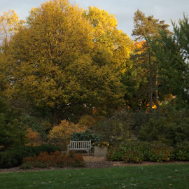 A fall Bench by Cheryl White - Novices Only Landscapes ( fall colors, bench, fall, trees, leaves, color, colorful, nature )