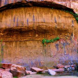 Rock Wall in Zion by Tara Bauman - Nature Up Close Rock & Stone ( rock wall, nature, utah, stone, national parks, rocks, zion )