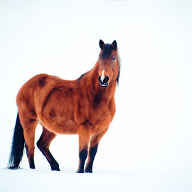 poser by Mindee Green - Animals Horses (  )