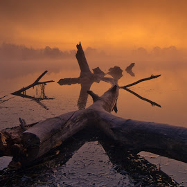 Story From Swamp by Philip Peynerdjiev - Landscapes Sunsets & Sunrises ( amazing, tree, fog, sunrise, swamp )