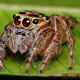 International Spider Survey