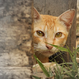 Mystical Cat, by Shreyas Dosi - Animals - Cats Portraits