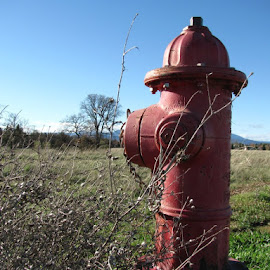 Fire Hydrant on a Wildlife Sanctuary by Diana Johnson - Novices Only Objects & Still Life