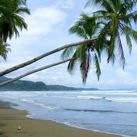 Playa Uvita Palms by Donovan Twaddle - Landscapes Beaches ( sand, hills, uvita, waves, palm trees, ocean, beach, sandy, zona sur, rainforest, palms, tides, jungle, costa rica, playa uvita )