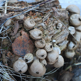 Dried Fungi by Katie Weniger - Nature Up Close Mushrooms & Fungi ( dehydrated, dried fungi, shriveled, spring melt, tree fungus )