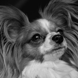 ciara.jpg by Ray Rosher - Animals - Dogs Portraits