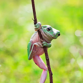 Morning Gym..... by Vincent Sinaga - Animals Amphibians