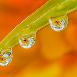 Les goutles l'eau by Nguyen Thevan - Nature Up Close Natural Waterdrops
