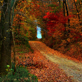 Autumnal Bower by Julie Dant - Landscapes Travel ( gravel roads, country roads, indiana backroads, autumn, fall, fall foliage )